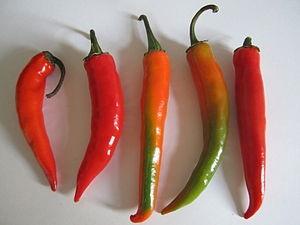 Frucht Chili 1